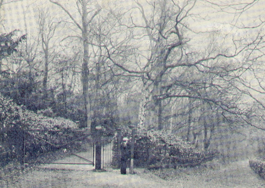View of the Old Coach Road, St. Ann's Hill, Chertsey, 1900 - 1910